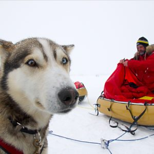 """North Pole Interview with Sky, the Dog: """"Things might get bloody"""""""