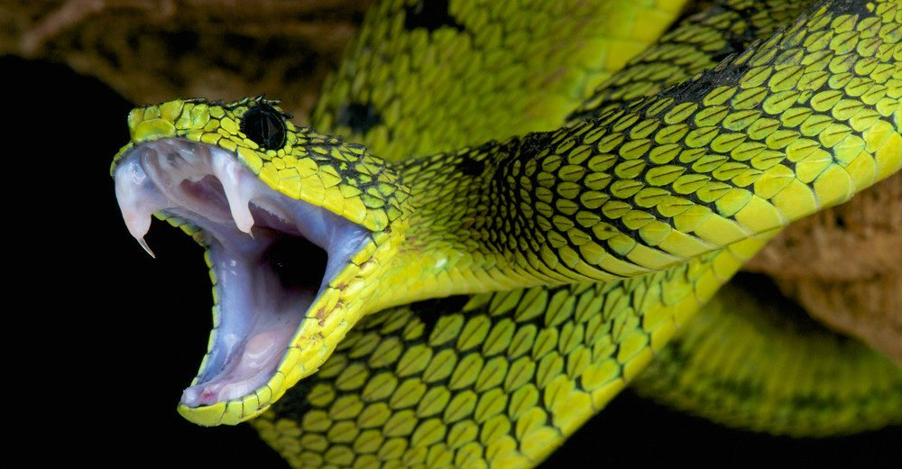 Dealing with Wildlife: Snakes