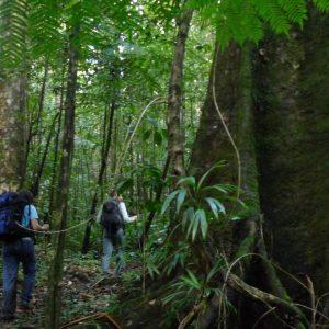 Trekking Dominica's Waitukubuli National Trail