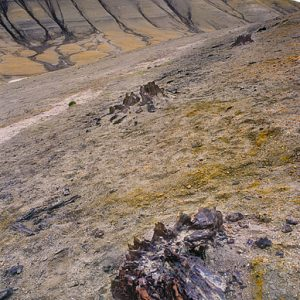 Natural Wonders: The Fossil Forest on Axel Heiberg Island