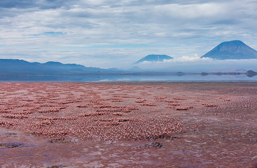 Pink flamingos in a red lake, with volcanoes in background