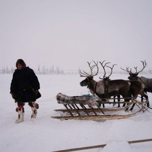 Freezing Rain Kills Reindeer in Northern Russia, Norway