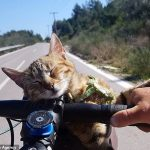 Cat Adopts Round-the-World Cyclist